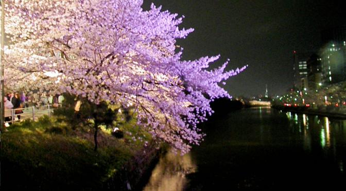 Hanami night