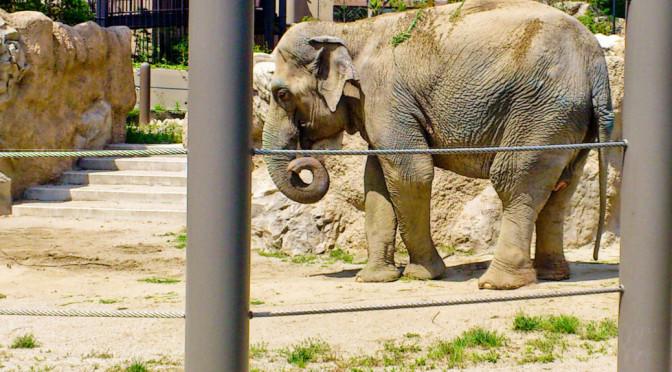 Fukuoka Zoo (week 14)