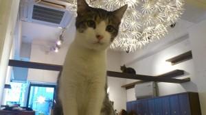 WEEK 5: CAT CAFE KEURIG
